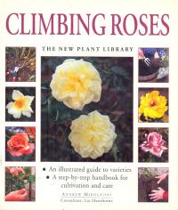 Climbing Roses - Mikolajski