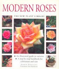Modern Roses - Mikolajski