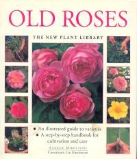 Old Roses - Mikolajski