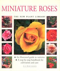 Miniature Roses - Hawthorne